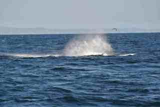 クジラ・クルーズ
