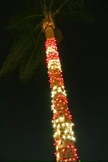 クリスマス/ライトアップ3.jpg